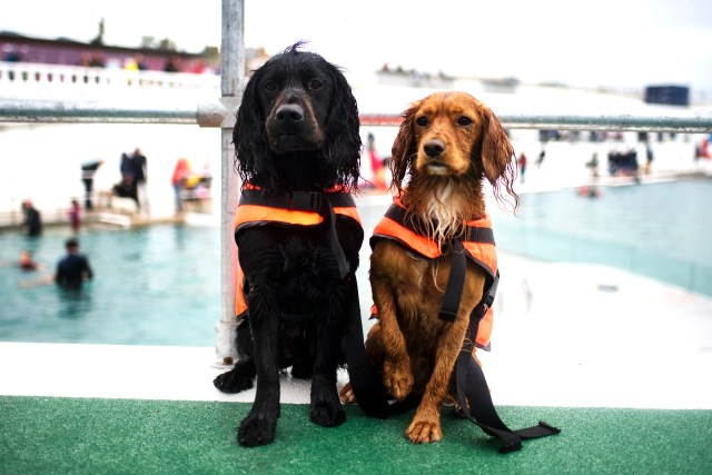 Dog Day at Jubilee Pool | The Cornish Dog