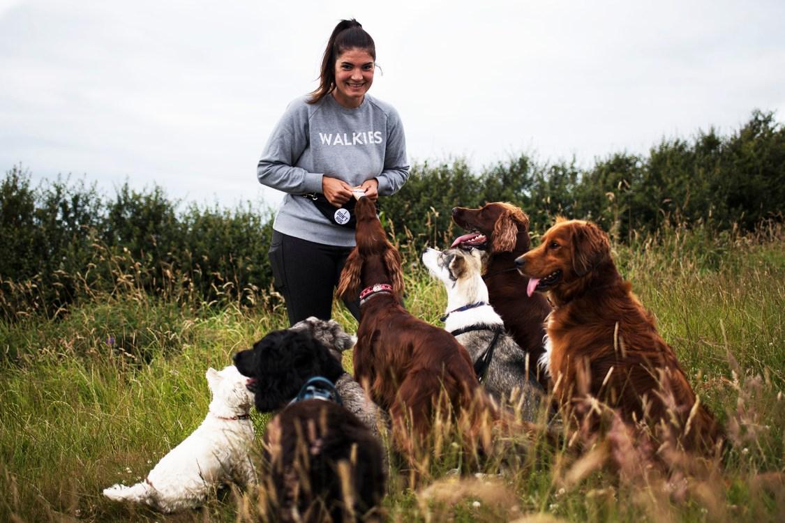 North Cornwall Dog Walking | The Cornish Dog