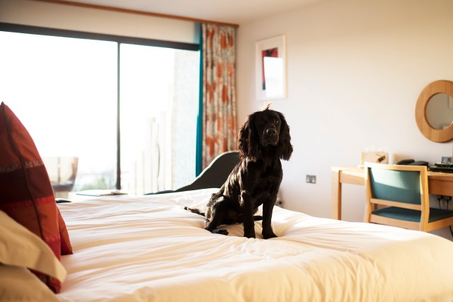 A Dog Friendly Stay at Bedruthan Hotel and Spa | The Cornish Dog