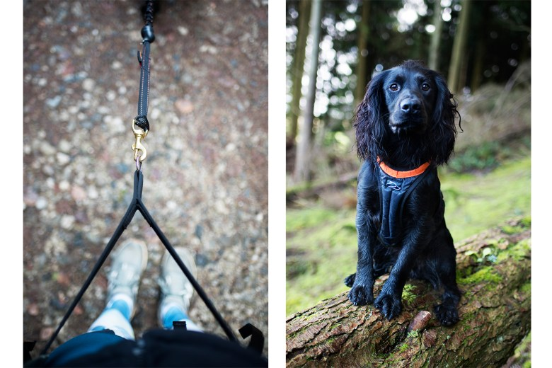 DogFit UK Canicross Starter Set   The Cornish Dog