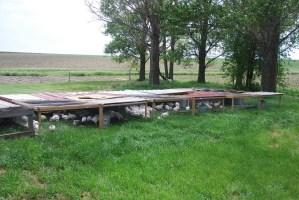 Chicken Tractors Wesselius Field Day