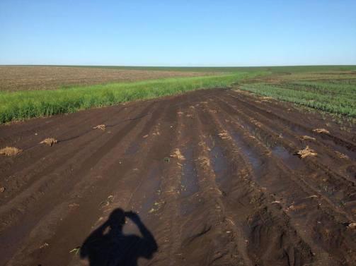 Leek field before the rain.
