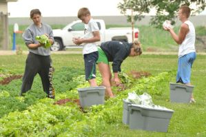 Students working at the Cornucopia