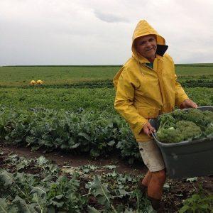 John Harvesting Broccoli