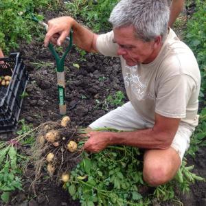 John digging potatoes