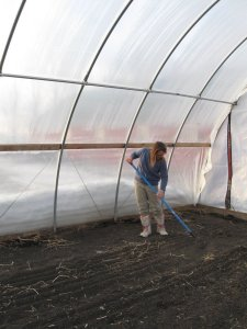 Janna raking in hoop house in February