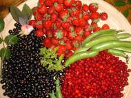 Strawberries, Black and Red Currants, Broad Beans and a rose bud.