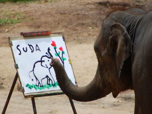 Elephant have excellent memory and are really talented animals