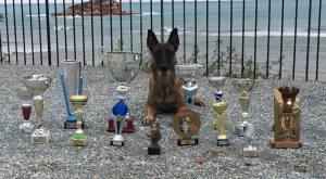 Hundetrening av spansk mester 2016