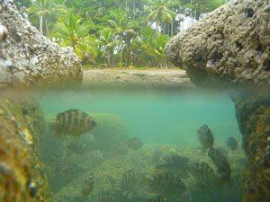 under water photo in osa peninsula, costa rica