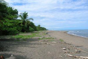 Explore Costa Rica's Best Beaches: Tortuguero | TCRN
