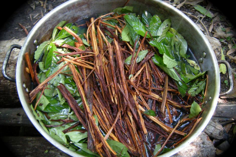 Image result for ayahuasca