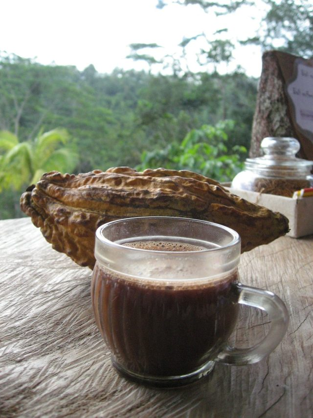 costa rica cacao