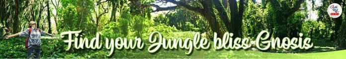 spirituality, ayahuasca