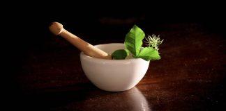 plant medicine costa rica