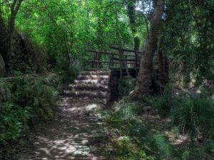Child Forest