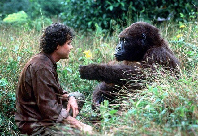 Congo was based on true events by portraiting the threat to gorillas population in Congo, Africa.