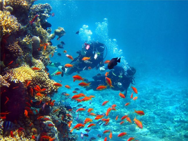 Divers exploring the colorful reefs of the Cahuita National Park
