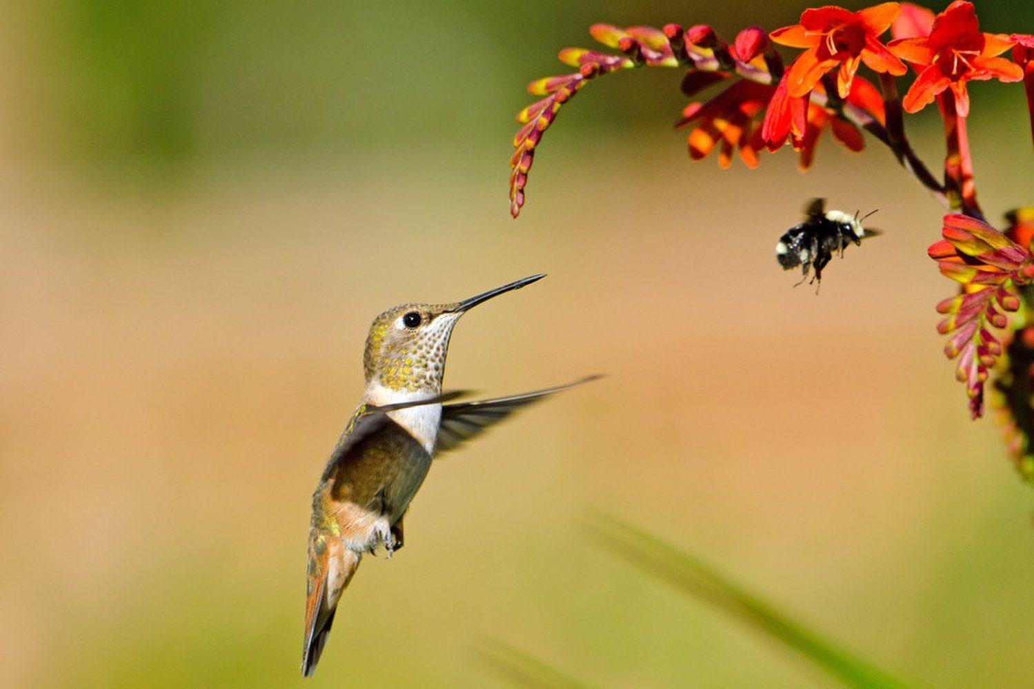Costa Rica A Paradise For Hummingbirds The Costa Rica News