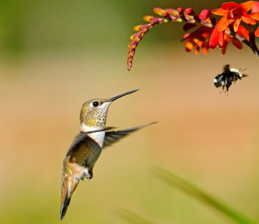 Costa Rica has an extraordinary biodiversity in flora and fauna.