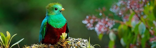 Quetzal are really beautiful birds.