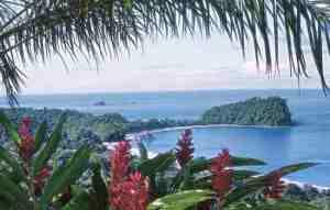 Vegetation of Manuel Antonio National Park