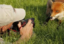 Nature photographer behind scenes animals