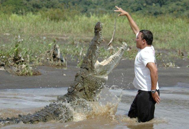The feeding a crocodile act looks as a very dangerous act.