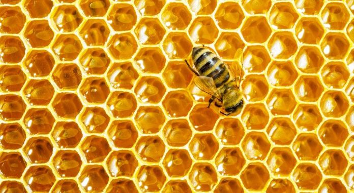 Bees are the most popular honey maker insects.