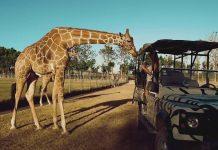 Pondrosa Adventure Park is very similar to the African Savanna.h
