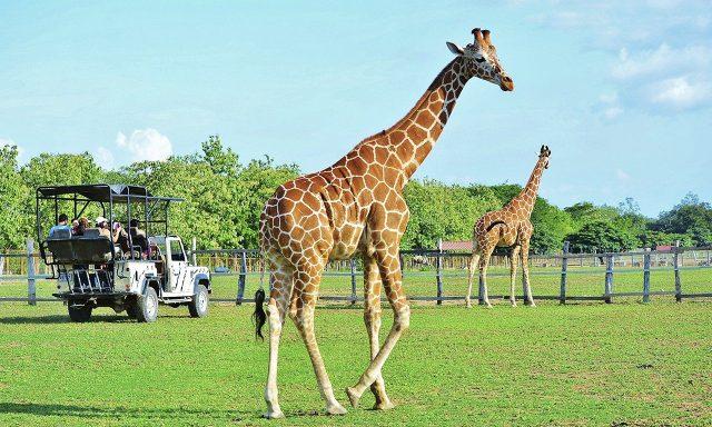 Pondrosa Adventure Park is very similar to the African Savannah.