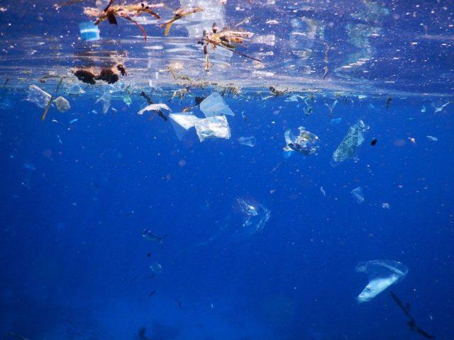 Debris floating in the ocean