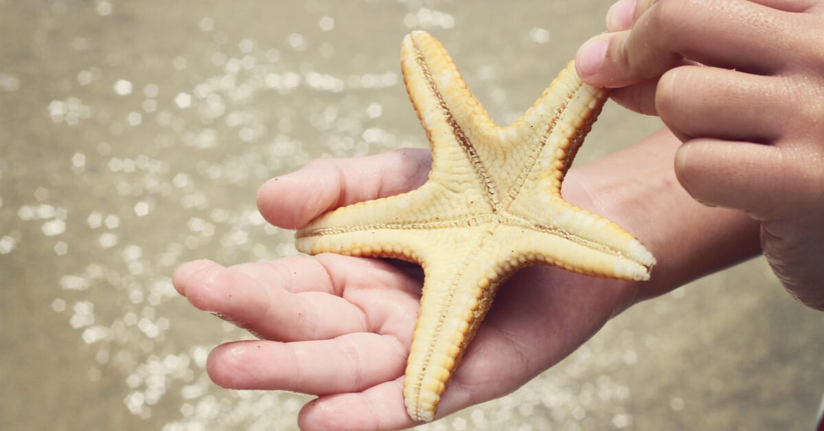 Why We Should Not Take Starfish Out Of The Water The Costa Rica News