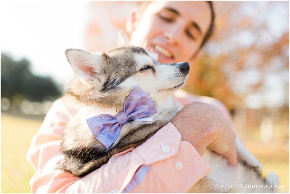 puppy bowtie Alaskan Klee Kai
