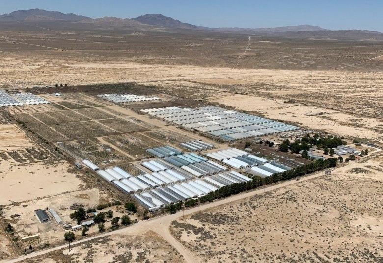 Sitio de cultivo ilegal de marihuana en California. Julio de 2021.