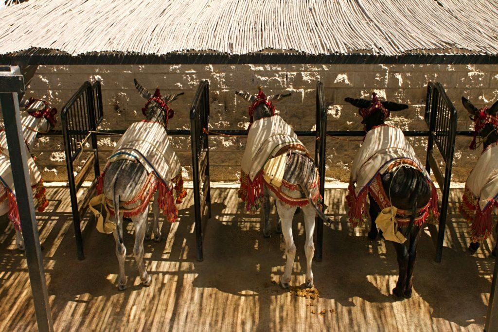 Mijas donkeys