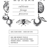 Interview * Natasha Morgan * Oak & Monkey Puzzle