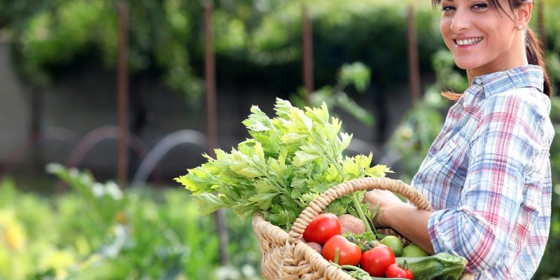 Nature's Harvest: A Step-By-Step Guide on Beginning a Backyard Vegetable Garden