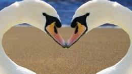 Animal monogamy