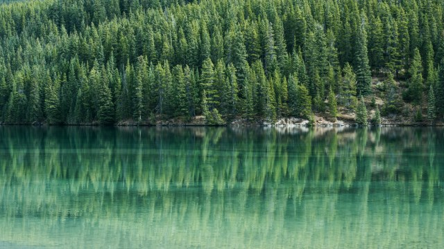 Trees and lake in Banff, Canada