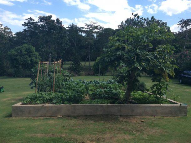 Jamaica organic garden