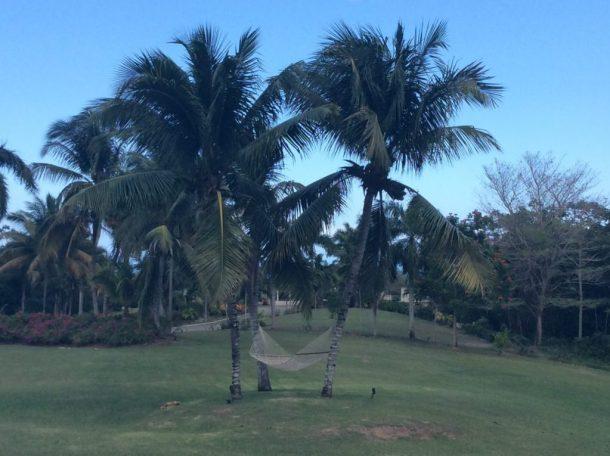 Jamaica hammock