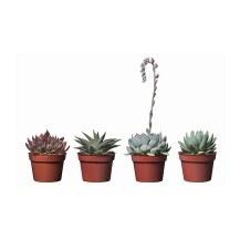 succulent-potted-plant__0121092_PE277870_S4