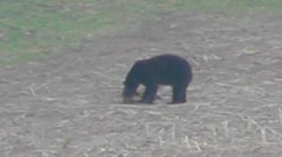 The Bear 006