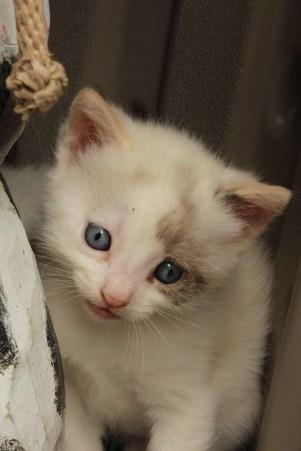 New Kittens! 027