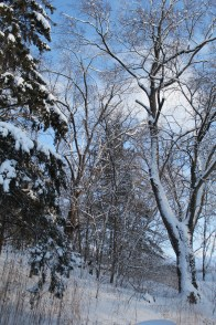 February 20th Snowstorm 010