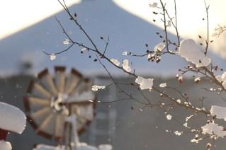 February 20th Snowstorm 055 - Copy