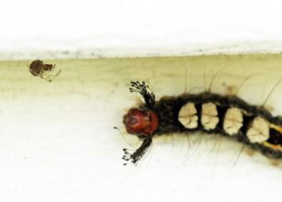 Caterpillar 002 EDIT