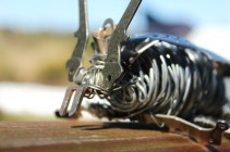 Sculptures, Bug and Elephant 007 - Copy