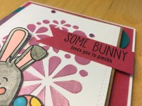 Some Bunny - close up